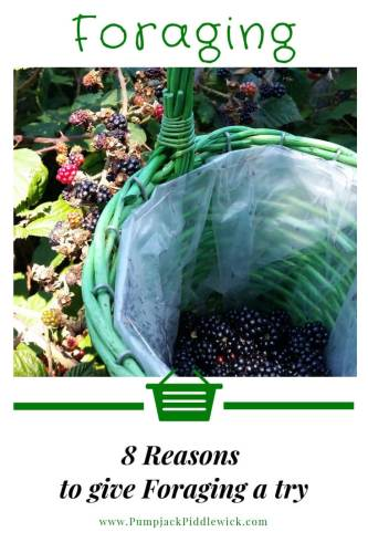 8 reasons to give Foraging a try at PumpjackPiddlewick
