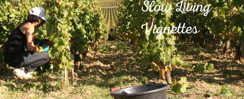 The vendange or grape harvest is on at PumpjackPiddlewick