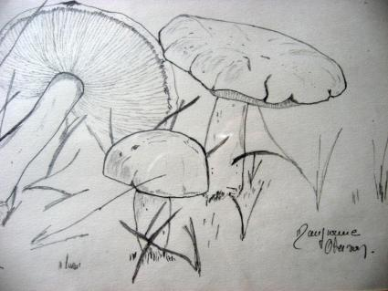 Mushroom Drawing at PumpjackPiddlewick