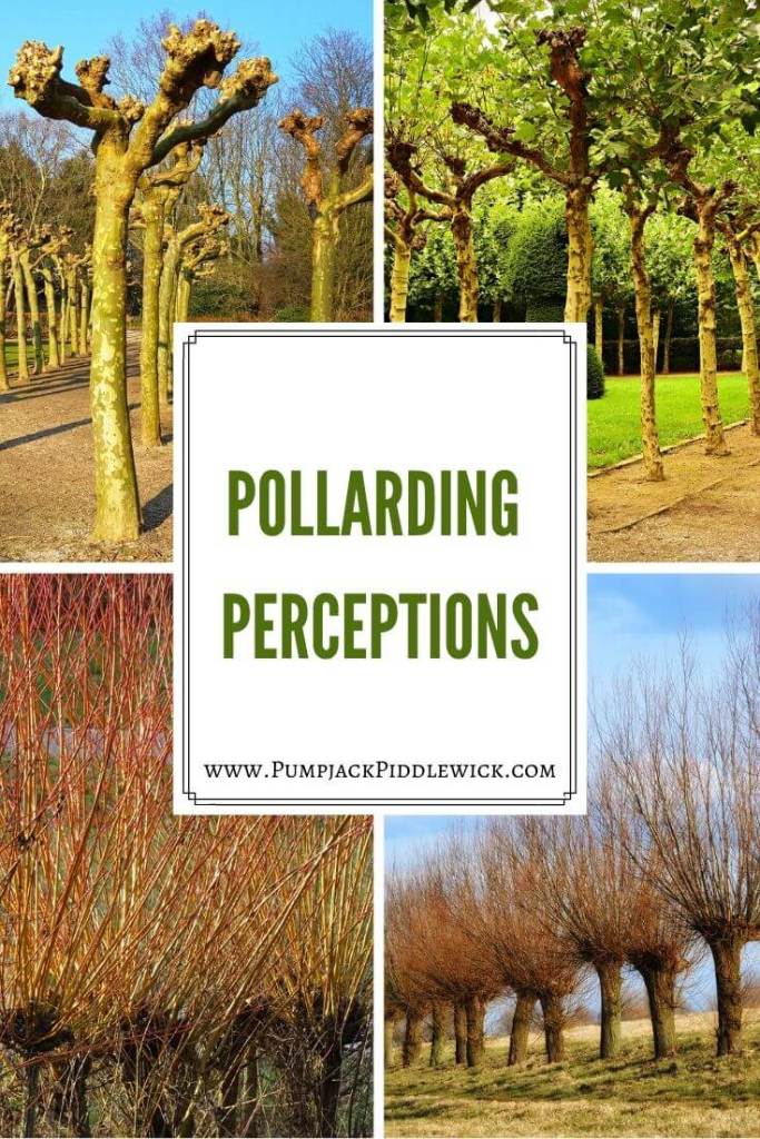 What is Pollarding - A French Finding of PumpjackPiddlewick