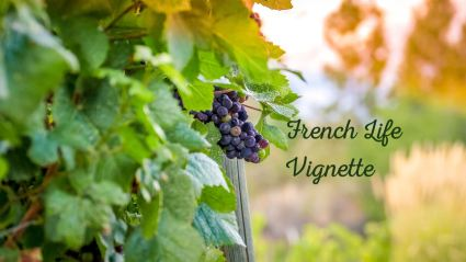 The vendage is what France calls the grape harvest that makes wines. Join in at Pumpjack & Piddlewick