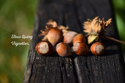 We are nuts about hazelnuts here at PumpjackPiddlewick - Recipes included