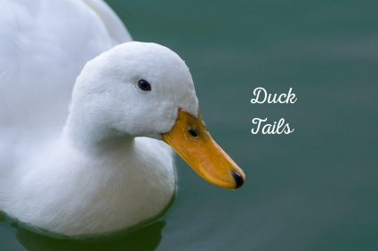 The myths and truths about Ducks and Water explored at PumpjackPiddlewick