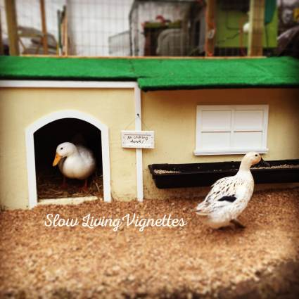 In contemplation of duck houses at PumpjackPiddlewick