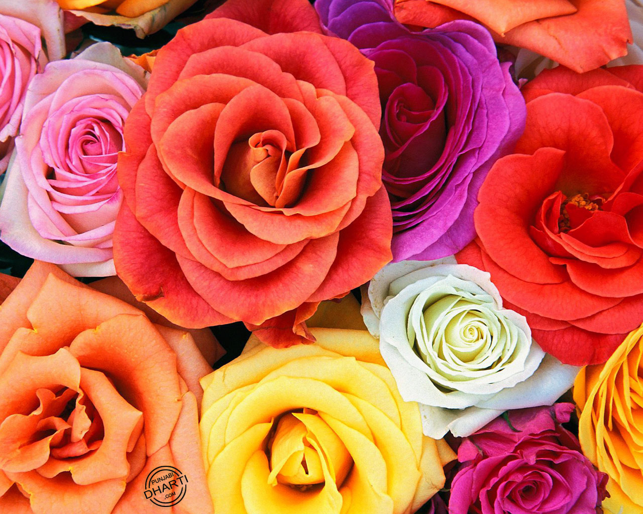 Angel Wallpapers With Quotes Flowers Wallpapers Love Blooms Roses Bunch Of Flowers Jpg