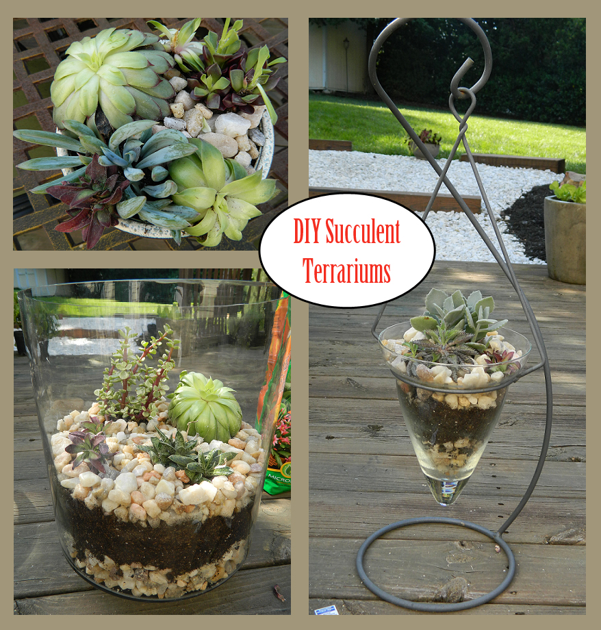 succulent terrariums turn average glass jars into pretty terrariums in 5 easy steps. Black Bedroom Furniture Sets. Home Design Ideas