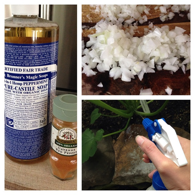 Finally: A DIY Pesticide I can spray on my garden plants without worrying about toxic chemicals!