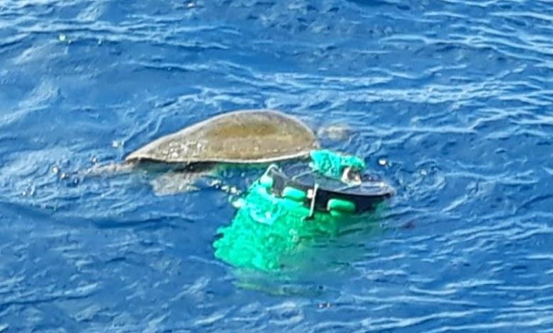 Photo of Guardacostas rescatan tortuga que estaba atada a un estañón