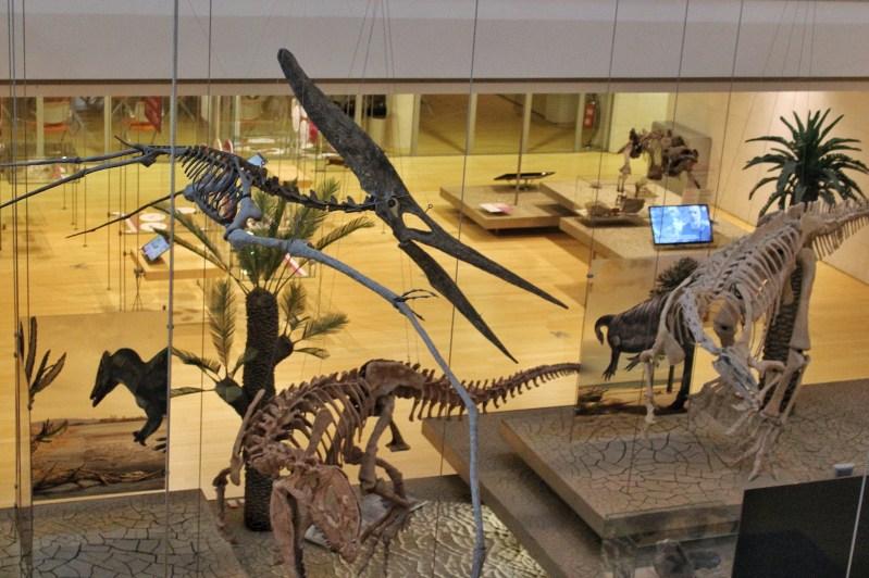 Scheletri di dinosauro, Muse