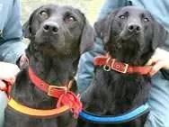 I due cani