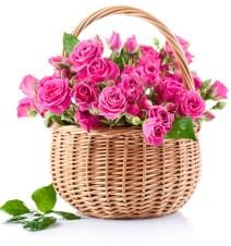 rose rosa in cestino