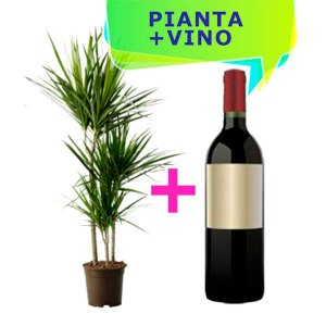 pianta dracena e bottiglia di vino rosso