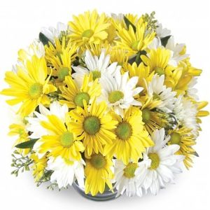 consegna a domicilio margherite gialle e bianche online