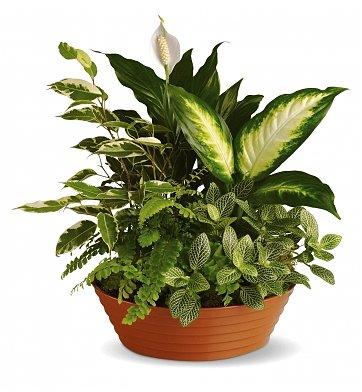 composizione in ciotola di piante verdi