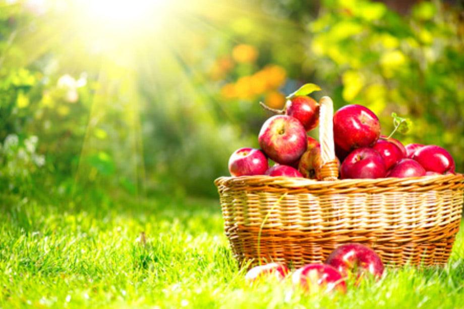 orto e frutteto cesto con mele rosse