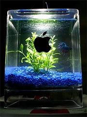 g4cube_aquarium