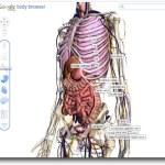 Google presentó Body Browser, para navegar por el cuerpo humano