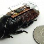 Científicos logran controlar una cucaracha por control remoto