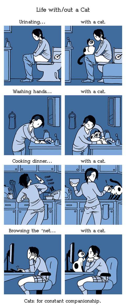 vivir-con-un-gato-sin