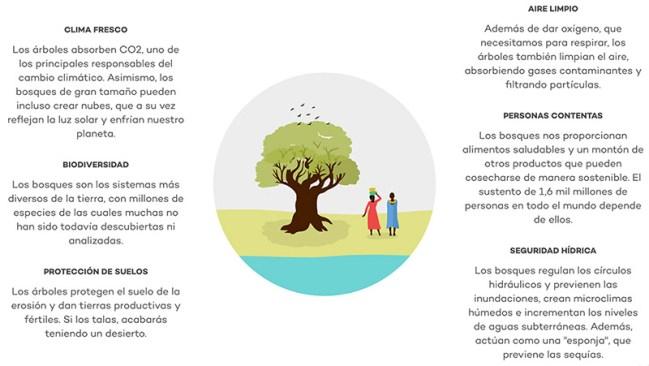 Importancia de plantar arboles