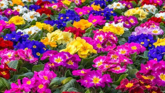 flores para el frío