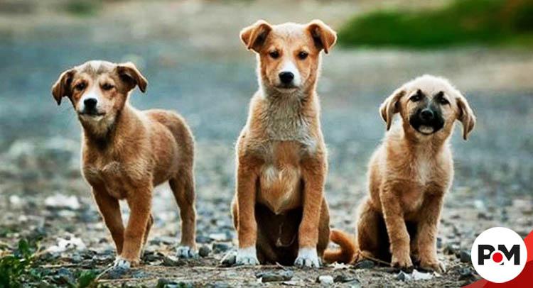'Matan' perros callejeros para limpiar ciudades rusas donde se jugará Mundial 2018