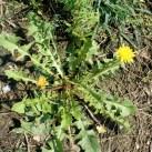 Texas cops mistake actual weeds for marijuana, spend hours doing yard work
