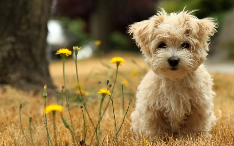Puppies and Flowers 04