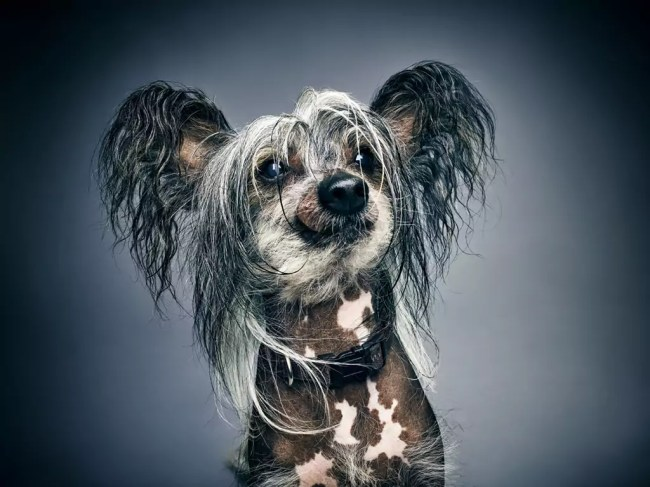 """Glamour Dogs"" by Albert Heijn 05"
