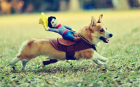 The Cutest Halloween Costumes for Small Dogs  Puppies