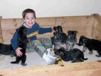 puppies_011709.jpg