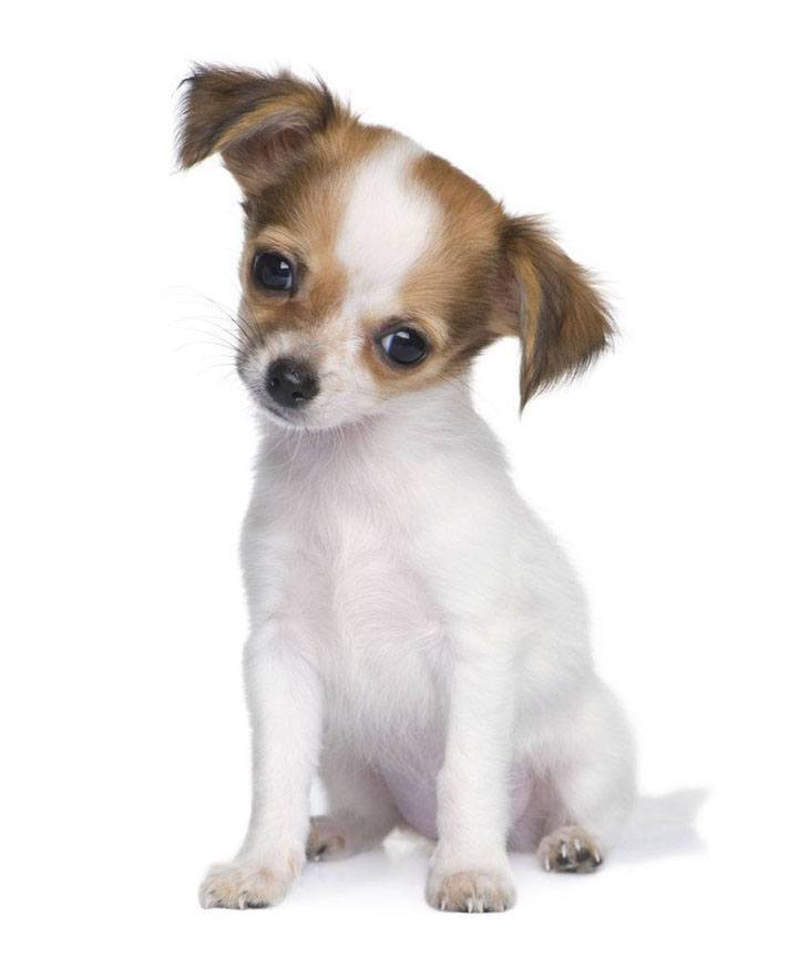 Cute Puppy Names For Your Charming Male Or Female Dog
