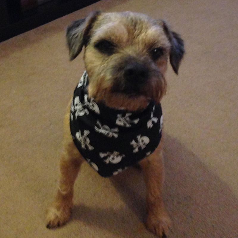 Skull And Crossbones Dog Bandanas For Sale