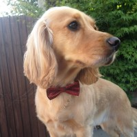 Bow Ties for Dogs   Adjustable Dickie Bows for Dogs