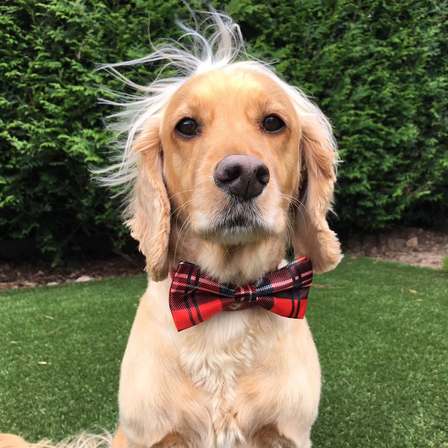 Red Checked Dog Bow Tie Tartan Dog Bow Tie