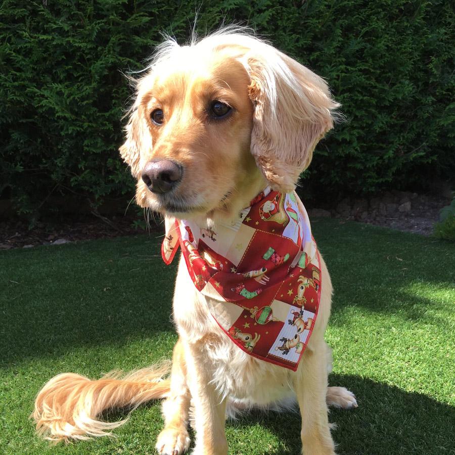 Santas Sleigh Dog Bandana