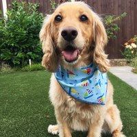 Sail Away Dog Bandana