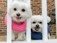 Puppy Bumpers | Puppy Bumpers keep dogs from getting out ...