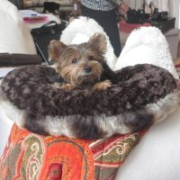 Small dog beds for small dogs | Puppy Hugger