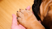 5 ways stop dogs nail