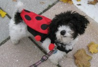 8 Easy Ways to Dress Your Dog For Halloween - Puppy Leaks