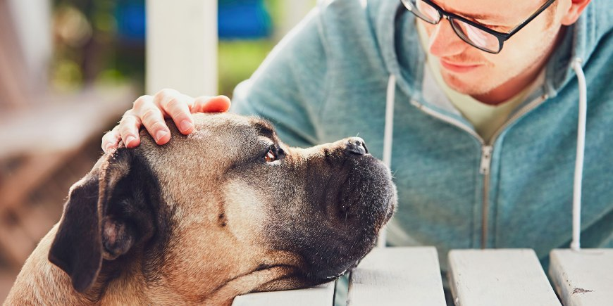 Is your 4-legged companion's hot nose a sign of illness?