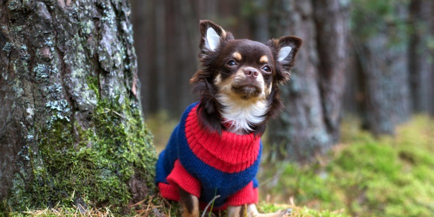 Keeping your dog warm this winter