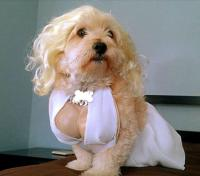 Funny dog costumes halloween picture of Marilyn Monroe Dog ...