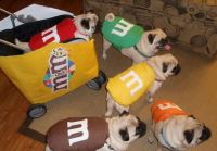 Funny pet dog halloween costumes with m and m costumes.JPG