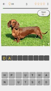 Dogs Quiz
