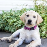 Purchase Yellow Lab Dress Up To 79 Off
