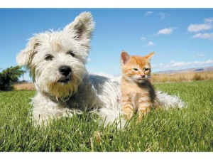 dog and cat cuddling in a field, pet insurance, dog health insurance, cat health insurance