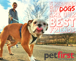 55 Reasons Dogs are our BFFs