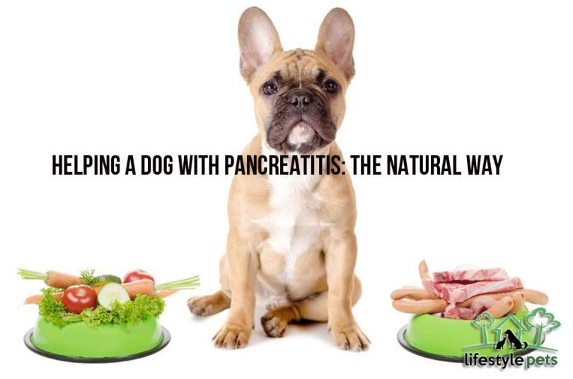 pancreatitisdog